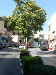 ailanto-sulla-strada-per-hebron
